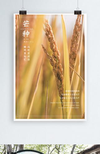 二十四节气芒种实拍麦穗麦田海报传统节日简约(1)
