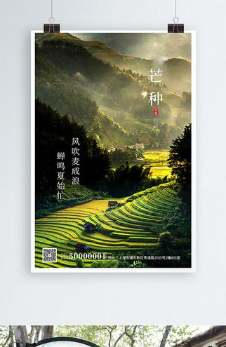 绿色简约实拍芒种节气二十四节气企业宣传海报传统节日(1)
