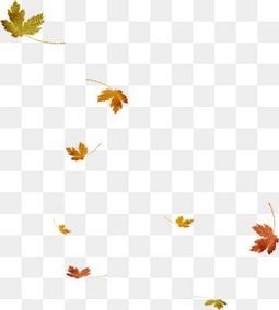 秋天的漂浮落叶枫叶
