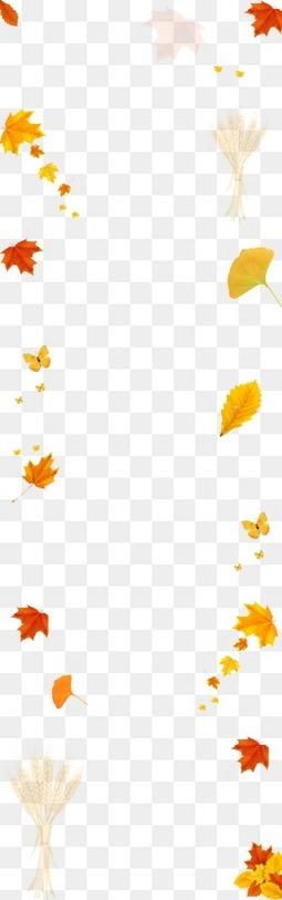 漂浮的落叶