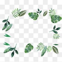 植物边框商用素材 绿色叶