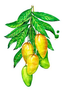 卡通黄色芒果png元素