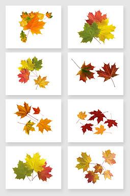 秋色凋零飞落的枫叶免扣图设计素材
